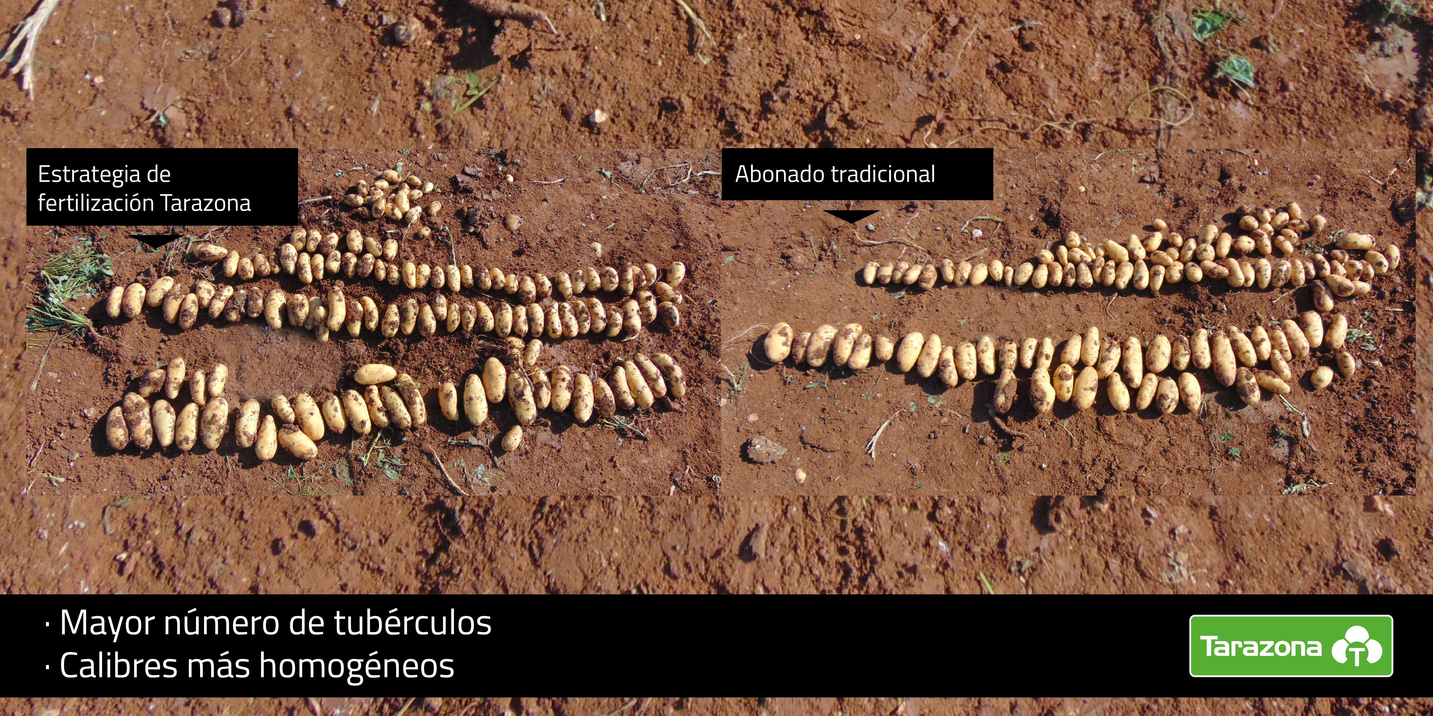 mejor fertilizante para patata