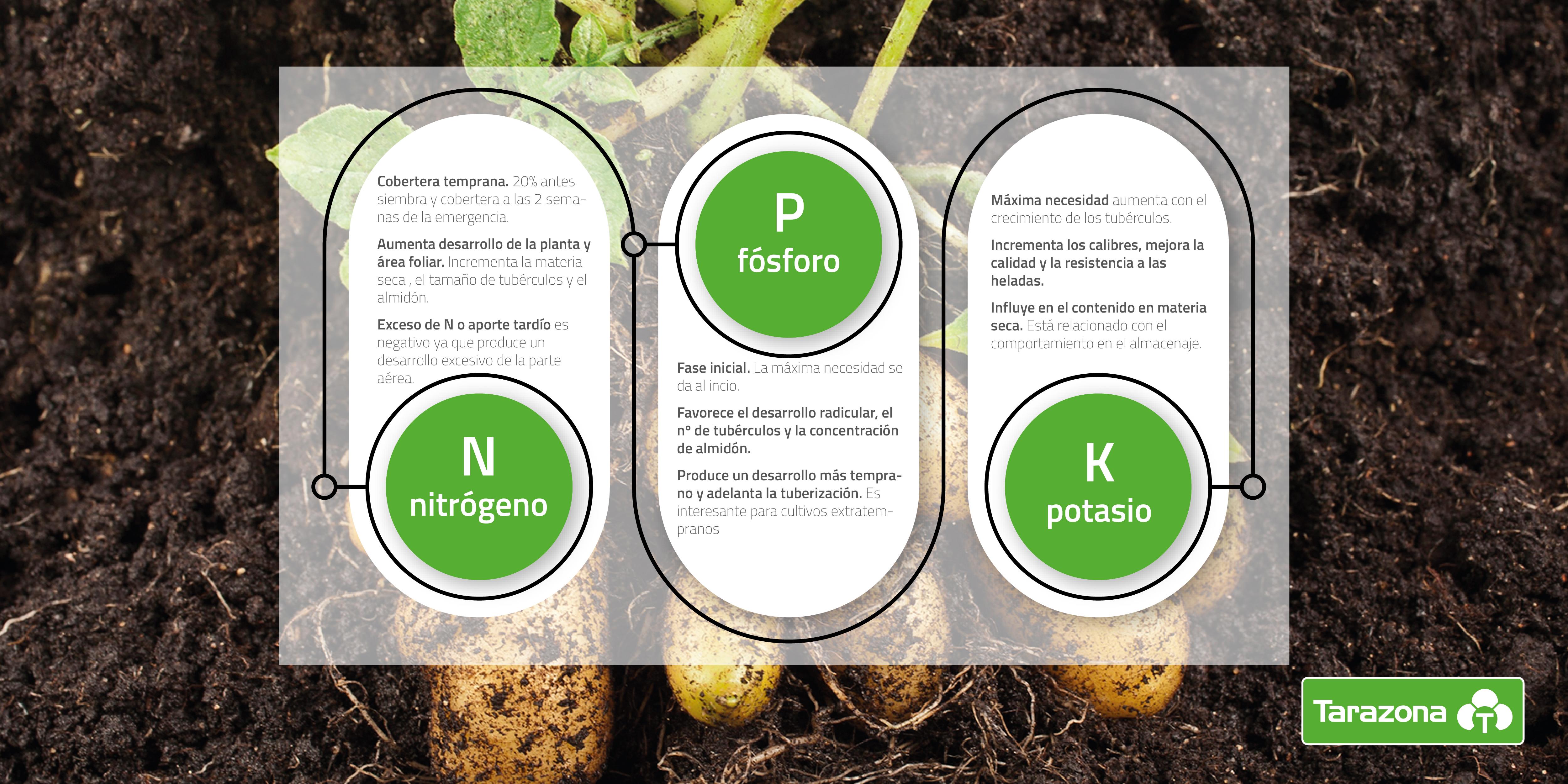 plan de fertilización para la patata