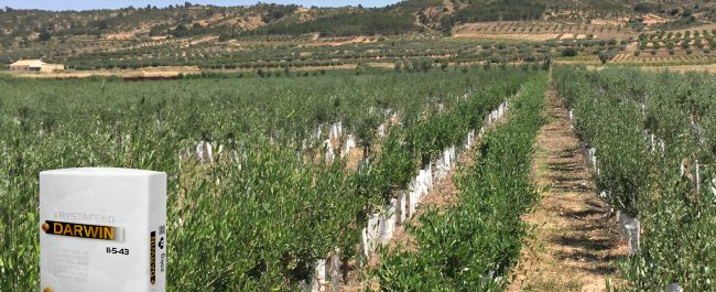 abono para fertirrigación del olivar