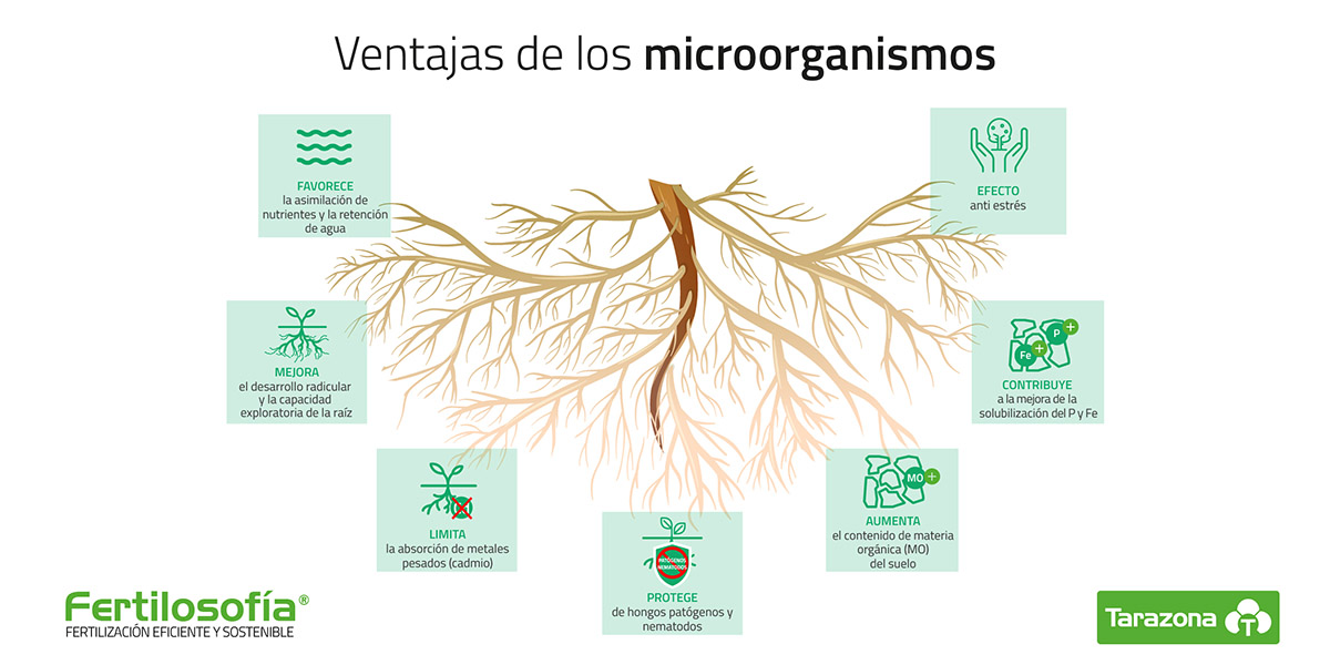ventajas microorganismos agricultura