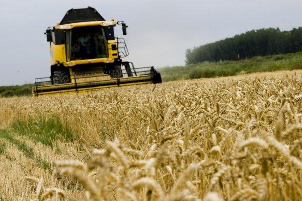 asaja cree cosecha cereales toneladas ano 1 744779