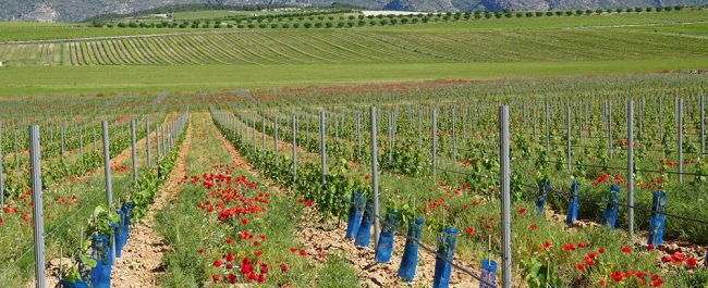 cultivos ecologicos 2 AEFA