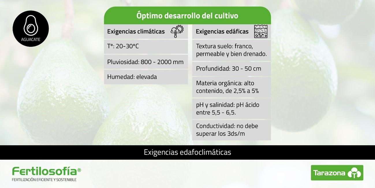 fertilizacion aguacate