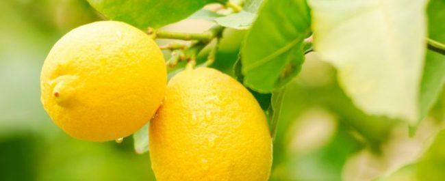 limón fino